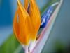 Ptasi Kwiat