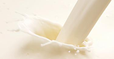 Mleko nasze codzienne